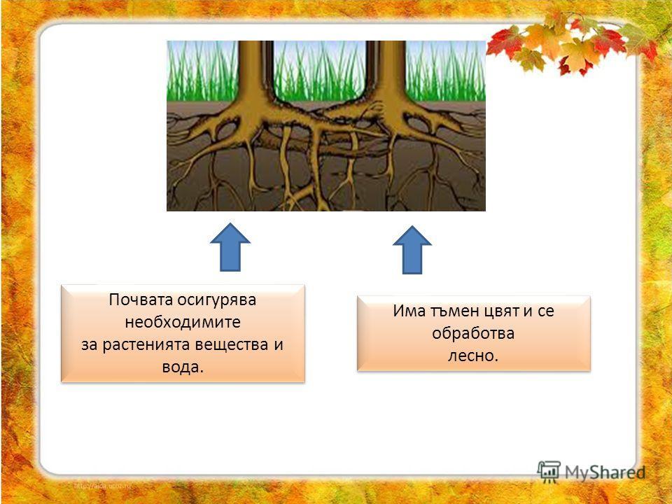 Почвата осигурява необходимите за растенията вещества и вода. Почвата осигурява необходимите за растенията вещества и вода. Има тъмен цвят и се обработва лесно. Има тъмен цвят и се обработва лесно.