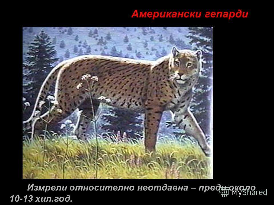 Американски гепарди Измрели относително неотдавна – преди около 10-13 хил.год.