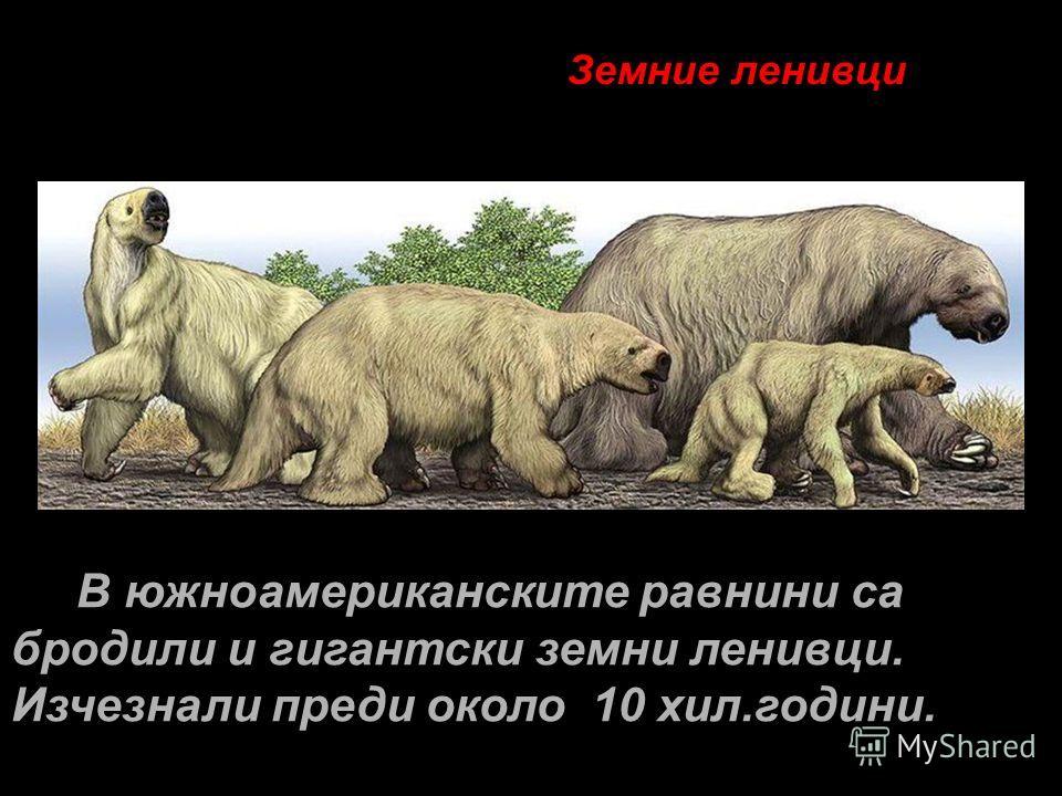 Земние ленивци В южноамериканските равнини са бродили и гигантски земни ленивци. Изчезнали преди около 10 хил.години.