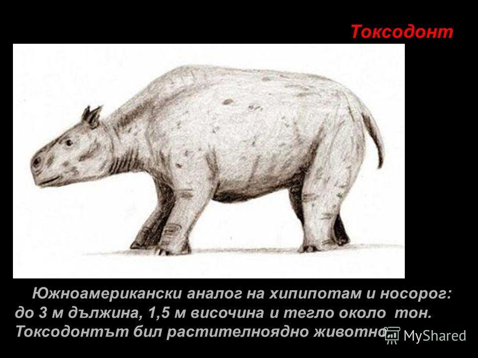 Токсодонт Южноамерикански аналог на хипипотам и носорог: до 3 м дължина, 1,5 м височина и тегло около тон. Токсодонтът бил растителноядно животно.