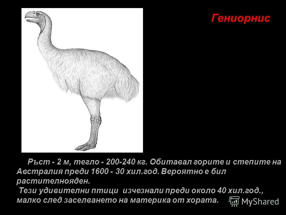 Гениорнис Ръст - 2 м, тегло - 200-240 кг. Обитавал горите и степите на Австралия преди 1600 - 30 хил.год. Вероятно е бил растителнояден. Тези удивителни птици изчезнали преди около 40 хил.год., малко след заселването на материка от хората.