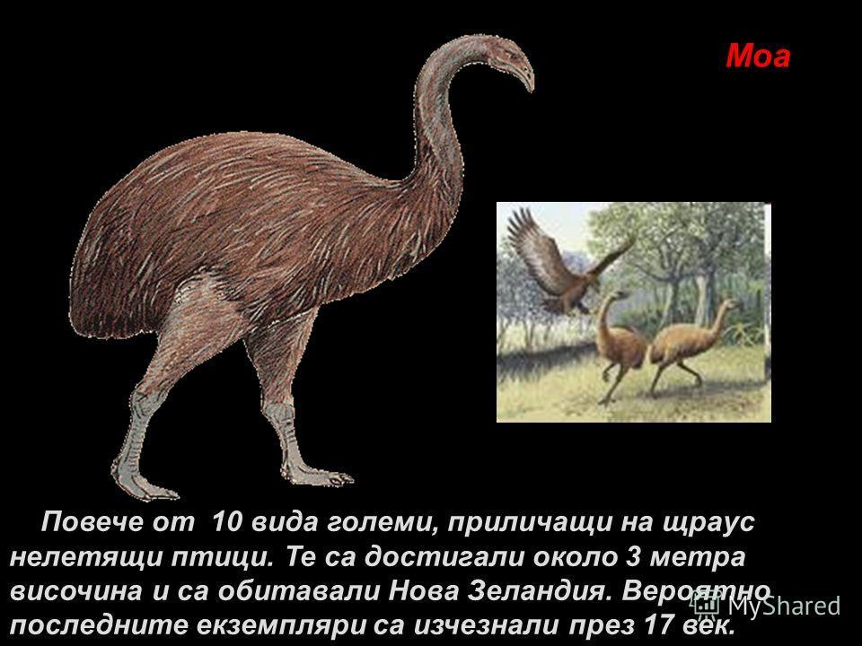 Моа Повече от 10 вида големи, приличащи на щраус нелетящи птици. Те са достигали около 3 метра височина и са обитавали Нова Зеландия. Вероятно последните екземпляри са изчезнали през 17 век.
