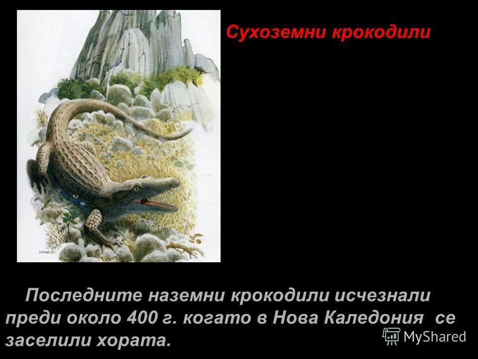 Сухоземни крокодили Последните наземни крокодили исчезнали преди около 400 г. когато в Нова Каледония се заселили хората.