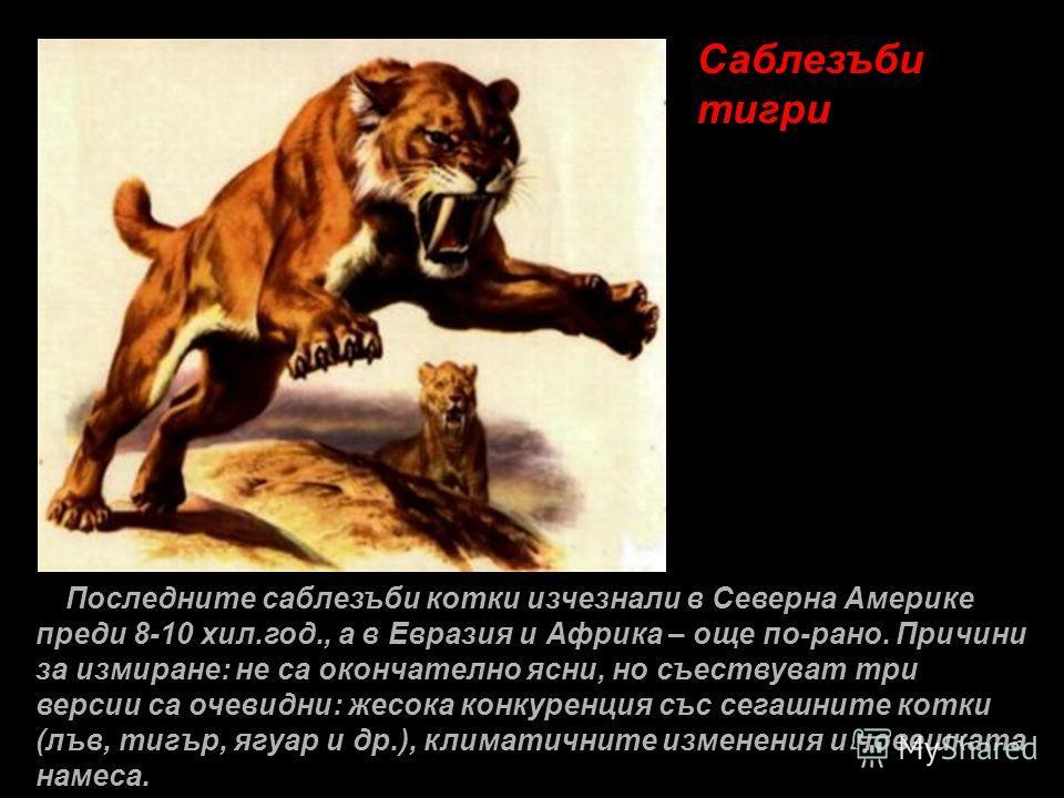 Саблезъби тигри Последните саблезъби котки изчезнали в Северна Америке преди 8-10 хил.год., а в Евразия и Африка – още по-рано. Причини за измиране: не са окончателно ясни, но съествуват три версии са очевидни: жесока конкуренция със сегашните котки