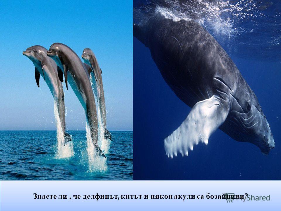 Знаете ли, че делфинът, китът и някои акули са бозайници?