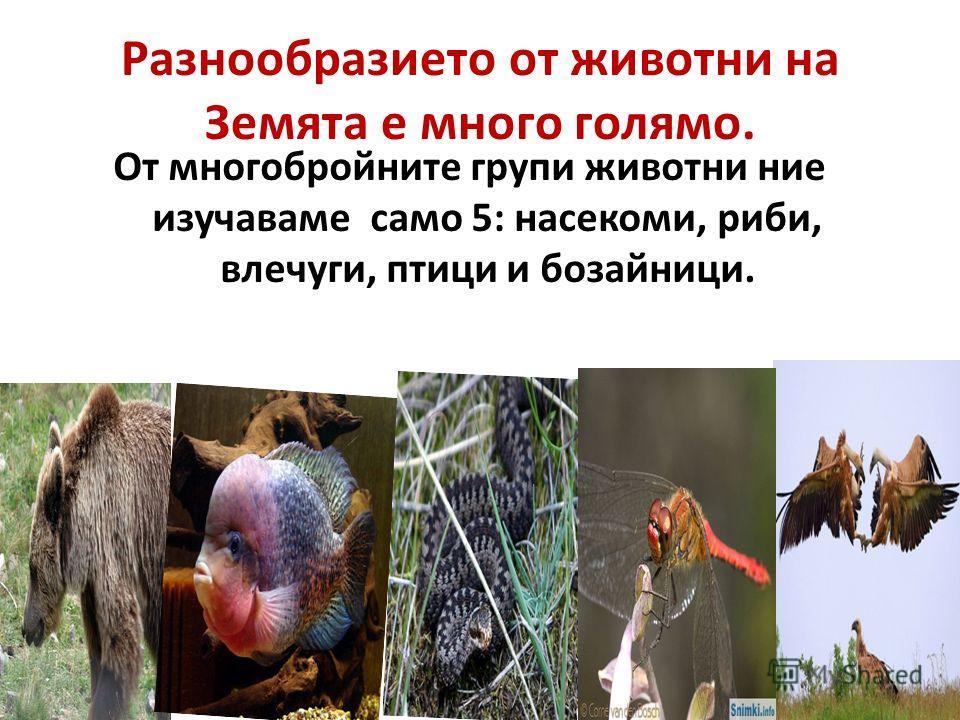 Разнообразието от животни на Земята е много голямо. От многобройните групи животни ние изучаваме само 5: насекоми, риби, влечуги, птици и бозайници.
