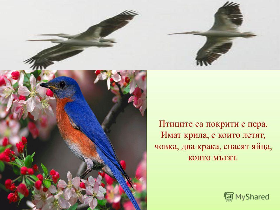 Птиците са покрити с пера. Имат крила, с които летят, човка, два крака, снасят яйца, които мътят.