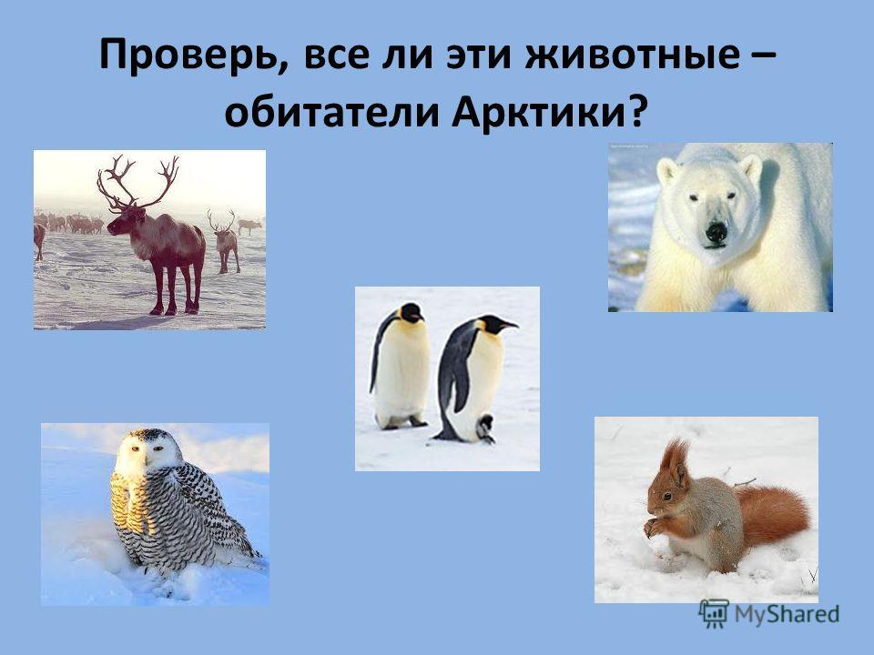 Проверь, все ли эти животные – обитатели Арктики?