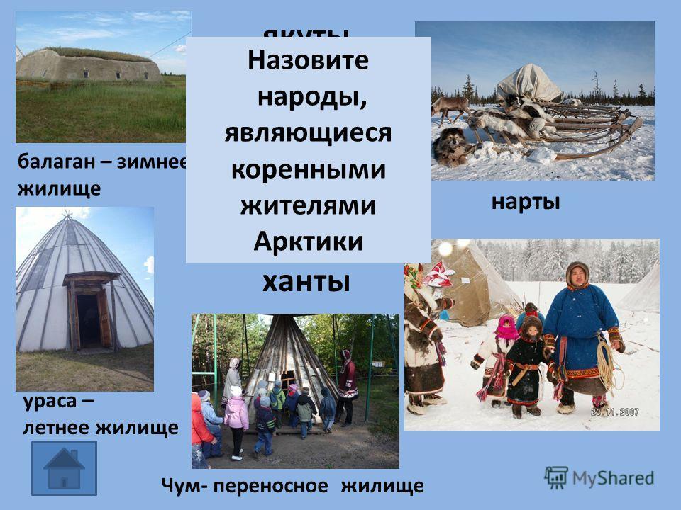 балаган – зимнее жилище ураса – летнее жилище нарты якуты эвенки ненцы ханты Чум- переносное жилище Назовите народы, являющиеся коренными жителями Арктики