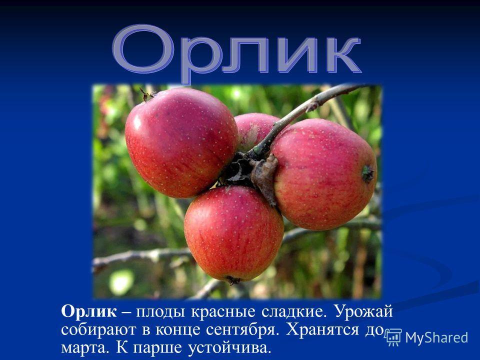 Орлик – плоды красные сладкие. Урожай собирают в конце сентября. Хранятся до марта. К парше устойчива.