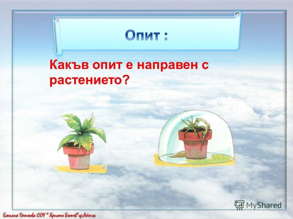 Какъв опит е направен с растението?