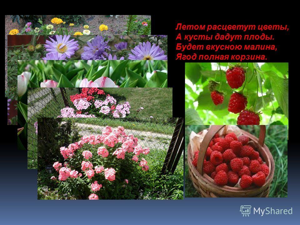 Огород мой, огород, Всё на нем всегда растёт, Если руки не ленивы, Если я трудолюбива.