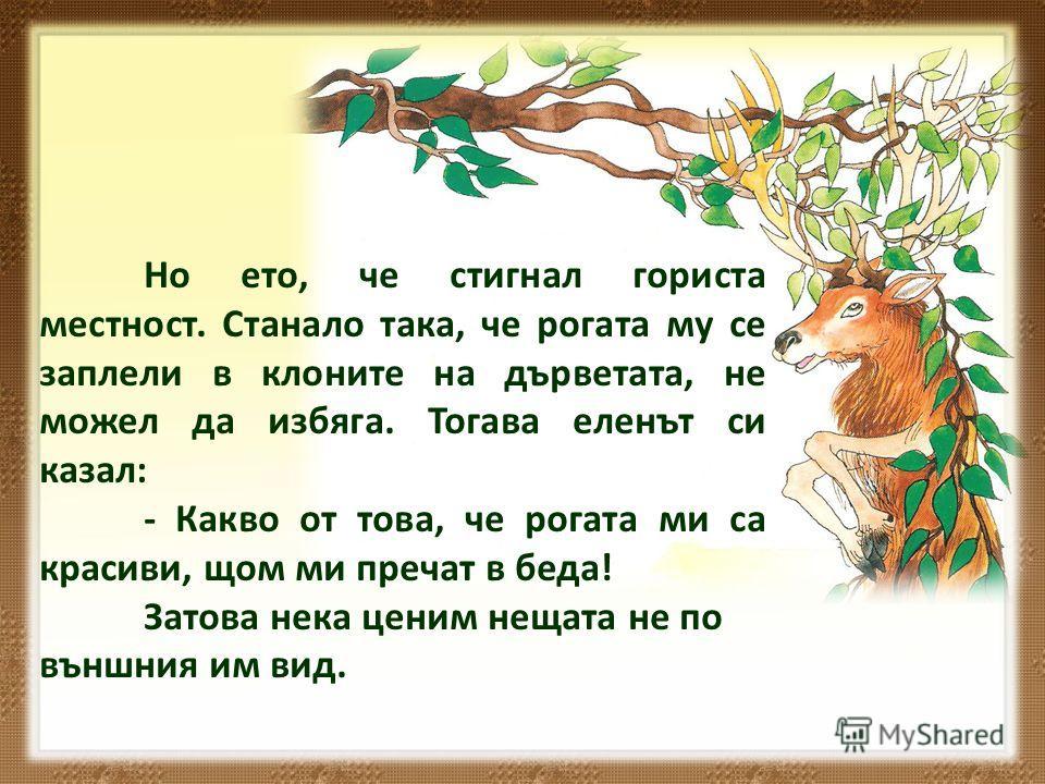 Но ето, че стигнал гориста местност. Станало така, че рогата му се заплели в клоните на дърветата, не можел да избяга. Тогава еленът си казал: - Какво от това, че рогата ми са красиви, щом ми пречат в беда! Затова нека ценим нещата не по външния им в