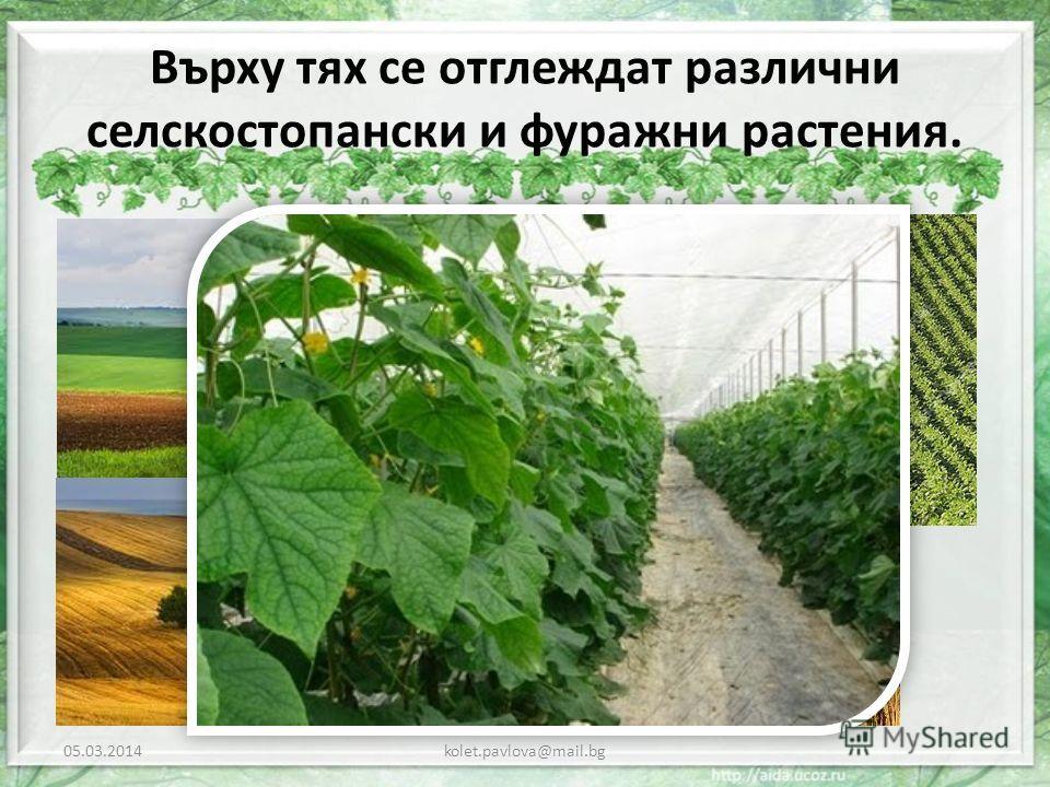 Върху тях се отглеждат различни селскостопански и фуражни растения. 05.03.2014kolet.pavlova@mail.bg