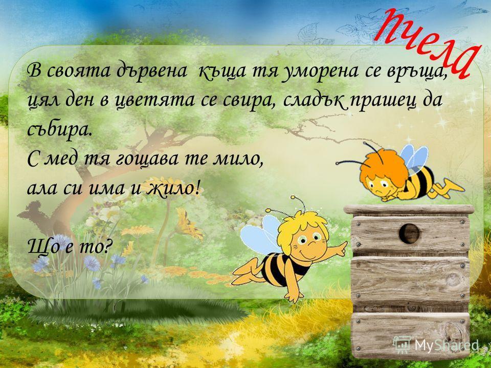 В своята дървена къща тя уморена се връща, цял ден в цветята се свира, сладък прашец да събира. С мед тя гощава те мило, ала си има и жило! Що е то?