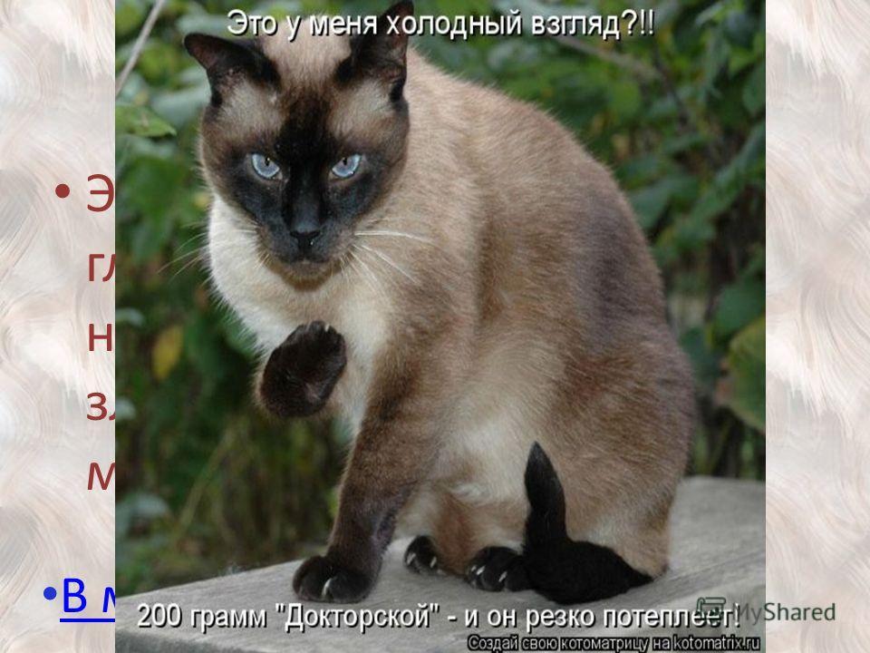 300 Этих кошек с голубыми глазами часто несправедливо называют злопамятными и мстительными. В меню