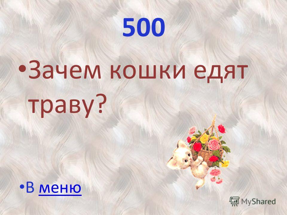 500 Зачем кошки едят траву? В менюменю