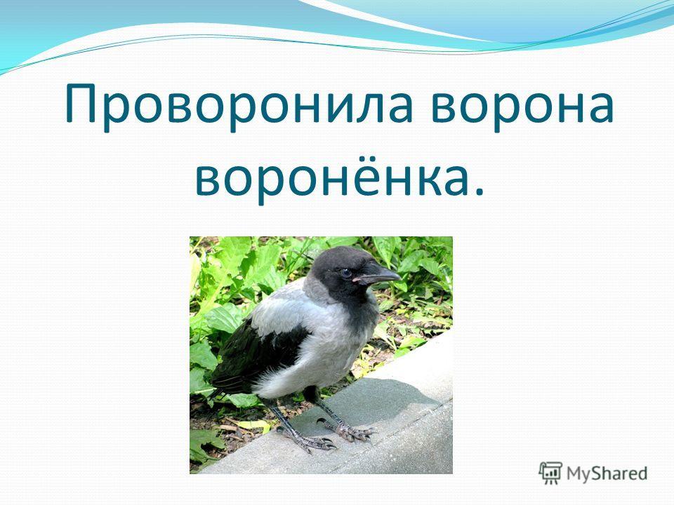 Проворонила ворона воронёнка.