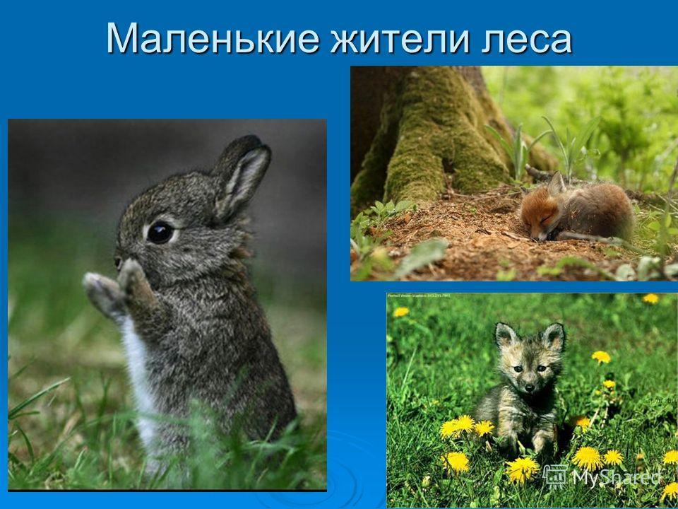 Маленькие жители леса