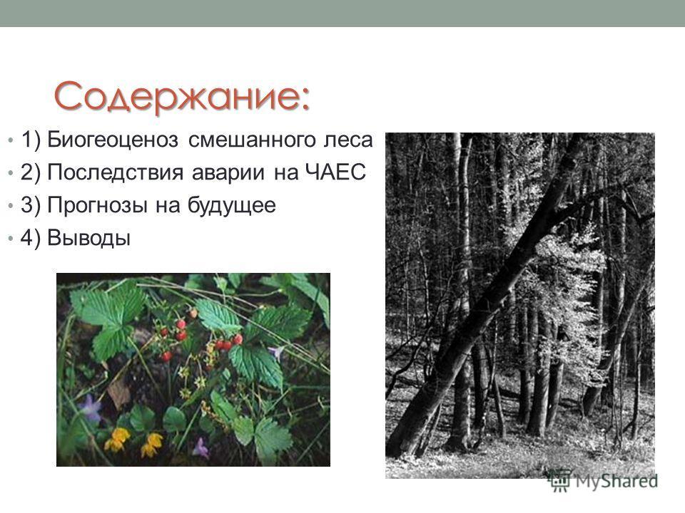 Содержание: 1) Биогеоценоз смешанного леса 2) Последствия аварии на ЧАЕС 3) Прогнозы на будущее 4) Выводы