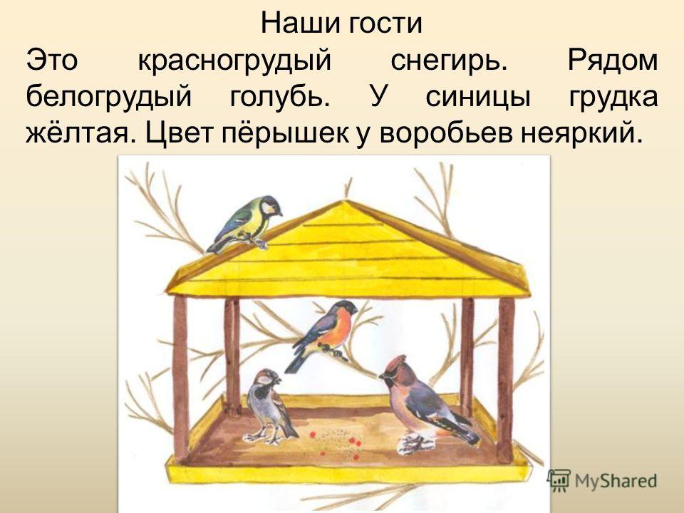 Наши гости Это красногрудый снегирь. Рядом белогрудый голубь. У синицы грудка жёлтая. Цвет пёрышек у воробьев неяркий.
