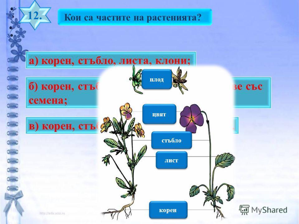 Кои са частите на растенията? 12. б) корен, стъбло, листа, цветове, плодове със семена; а) корен, стъбло, листа, клони; в) корен, стъбло, листа, бодли, цветове. плод цвят стъбло лист корен