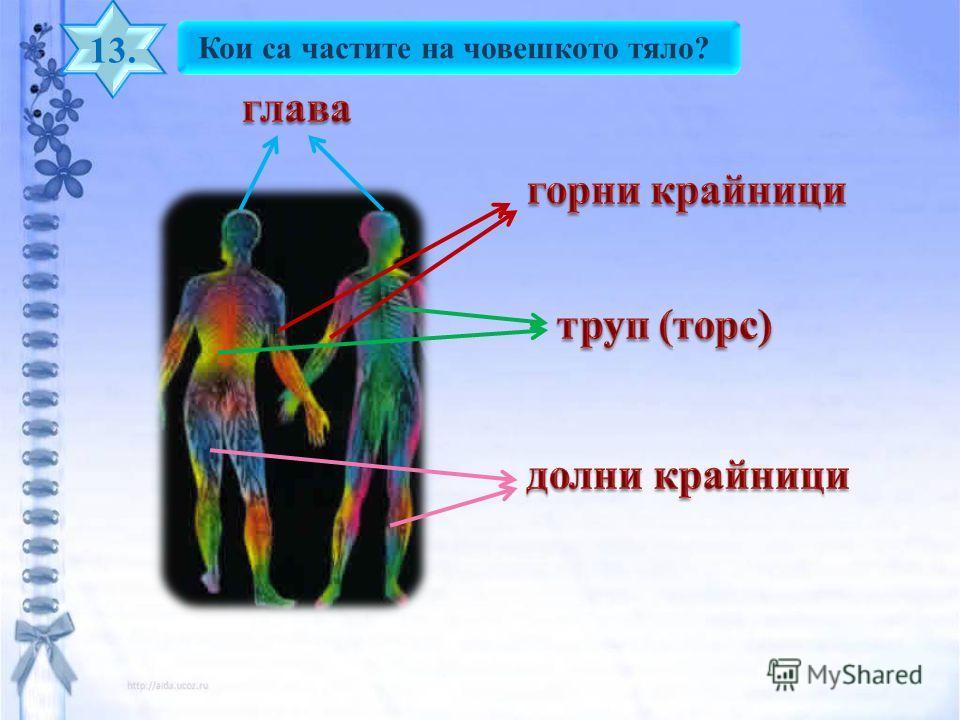 Кои са частите на човешкото тяло? 13.