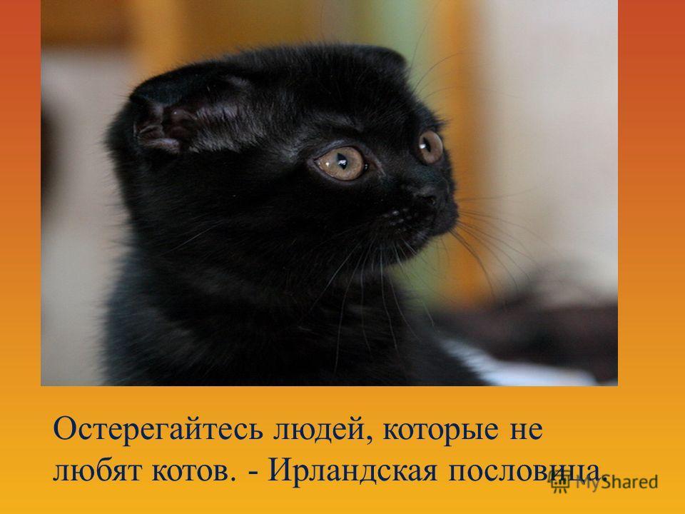 Остерегайтесь людей, которые не любят котов. - Ирландская пословица.