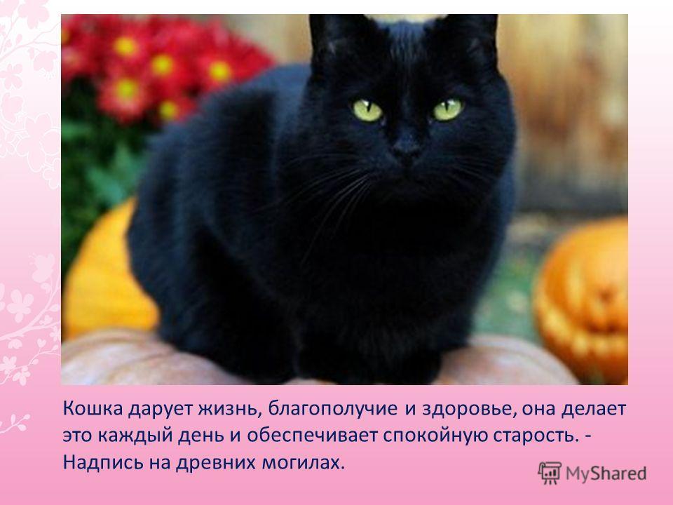 Кошка дарует жизнь, благополучие и здоровье, она делает это каждый день и обеспечивает спокойную старость. - Надпись на древних могилах.