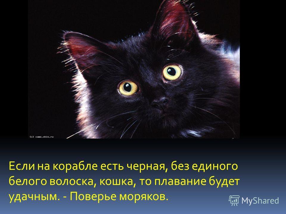 Если на корабле есть черная, без единого белого волоска, кошка, то плавание будет удачным. - Поверье моряков.