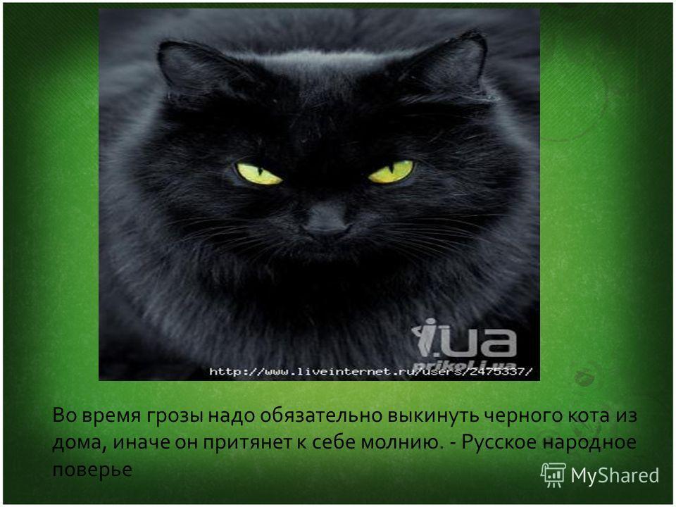 Во время грозы надо обязательно выкинуть черного кота из дома, иначе он притянет к себе молнию. - Русское народное поверье