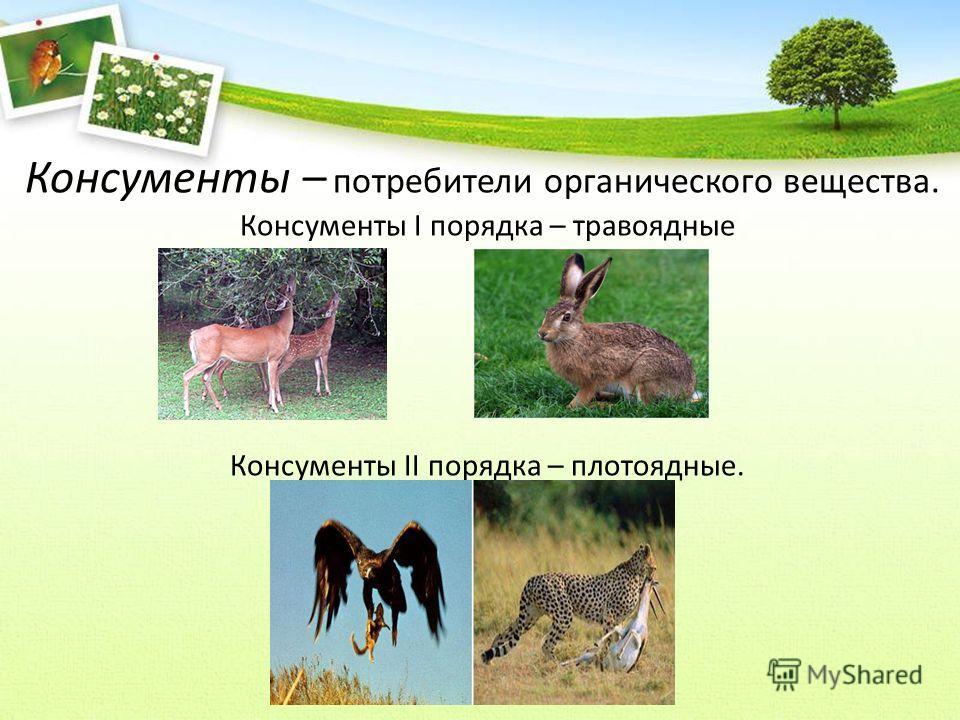 Консументы – потребители органического вещества. Консументы I порядка – травоядные Консументы II порядка – плотоядные.