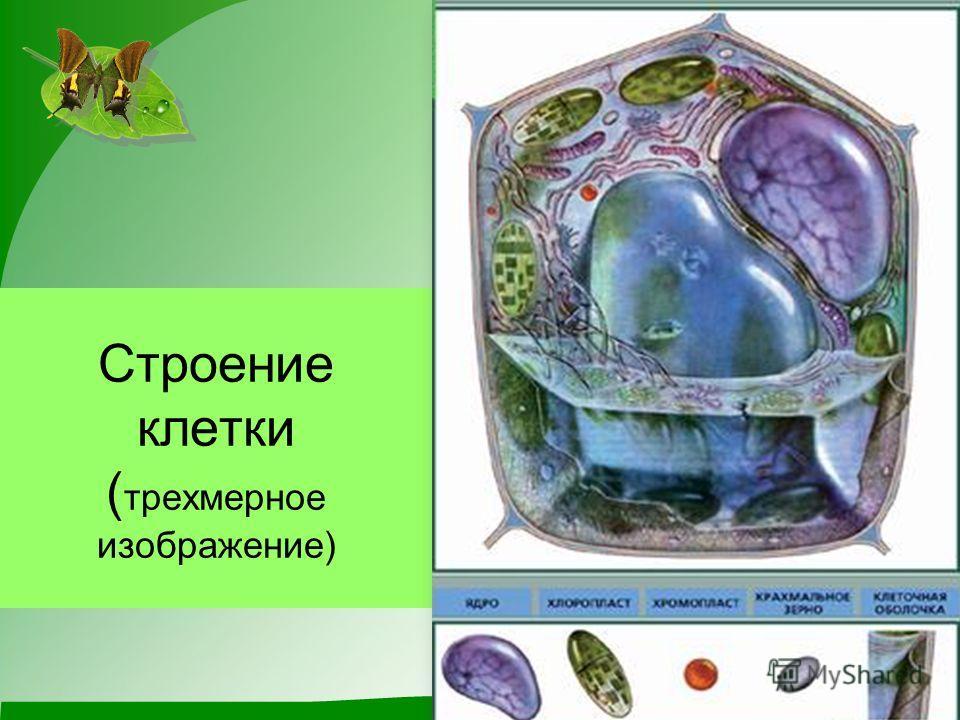 Строение клетки ( трехмерное изображение)