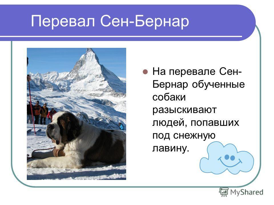 Перевал Сен-Бернар На перевале Сен- Бернар обученные собаки разыскивают людей, попавших под снежную лавину.