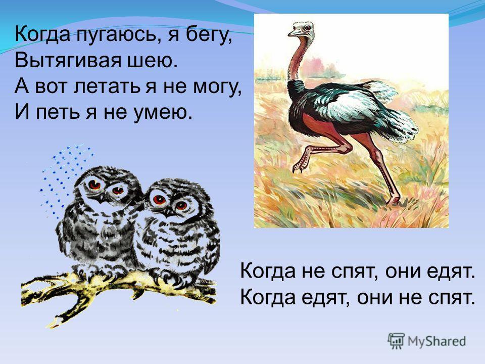 Когда пугаюсь, я бегу, Вытягивая шею. А вот летать я не могу, И петь я не умею. Когда не спят, они едят. Когда едят, они не спят.