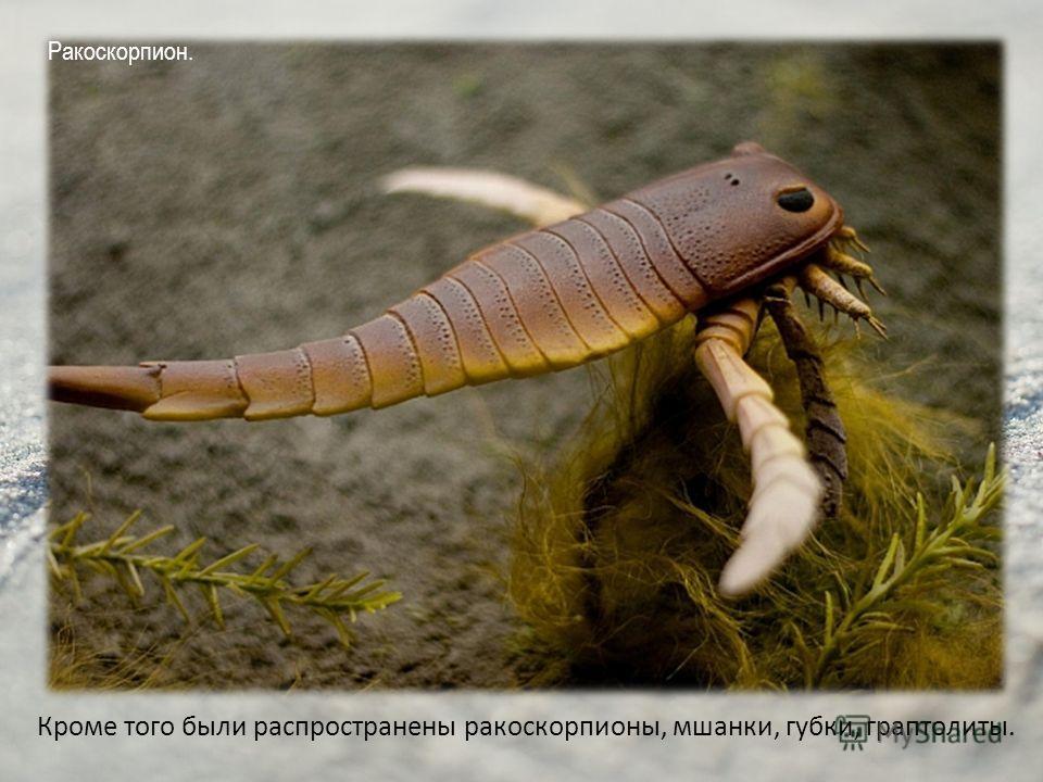 Кроме того были распространены ракоскорпионы, мшанки, губки, граптолиты. Ракоскорпион.
