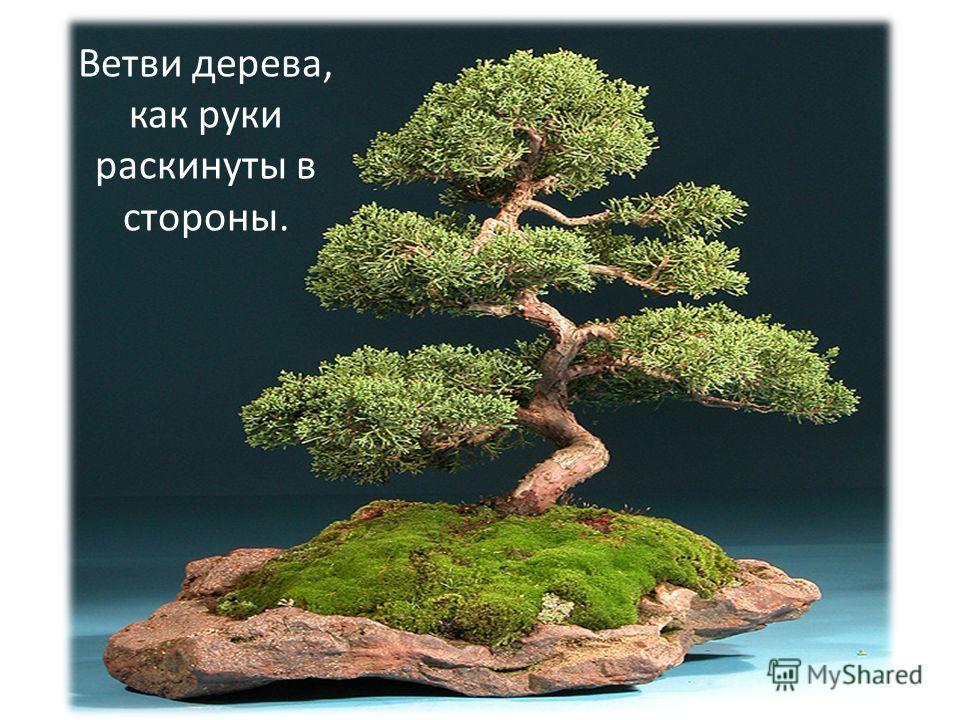 Ветви дерева, как руки раскинуты в стороны.