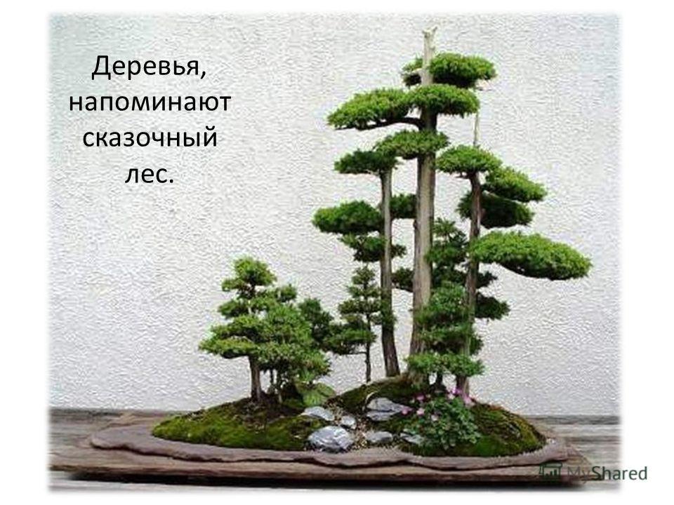 Деревья, напоминают сказочный лес.
