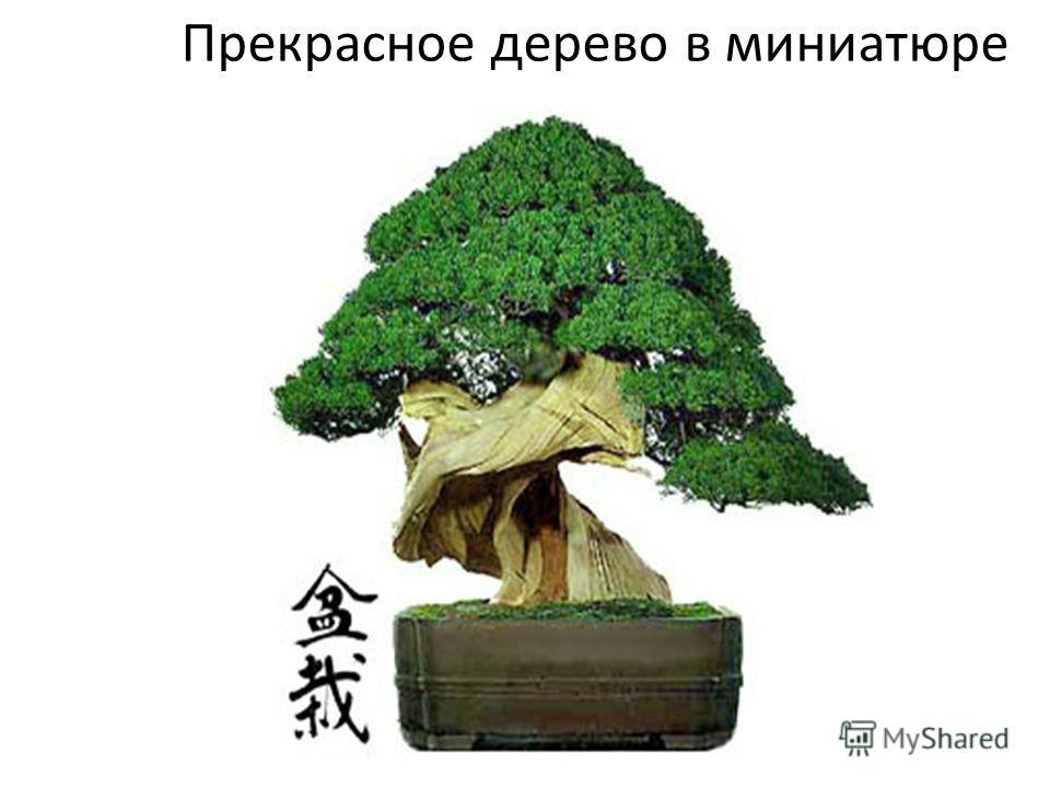 Прекрасное дерево в миниатюре