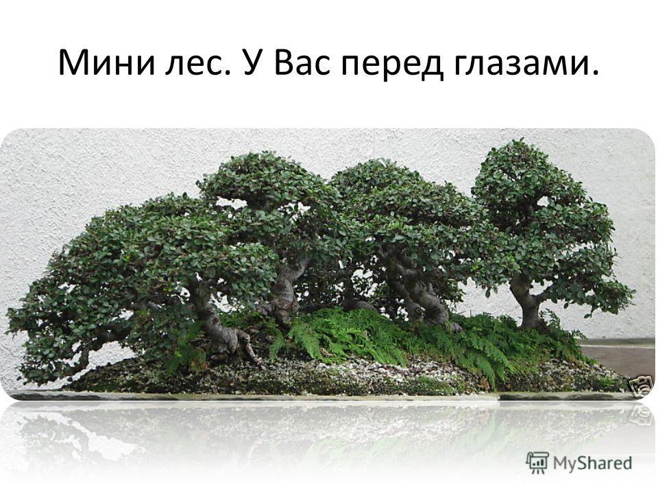 Мини лес. У Вас перед глазами.