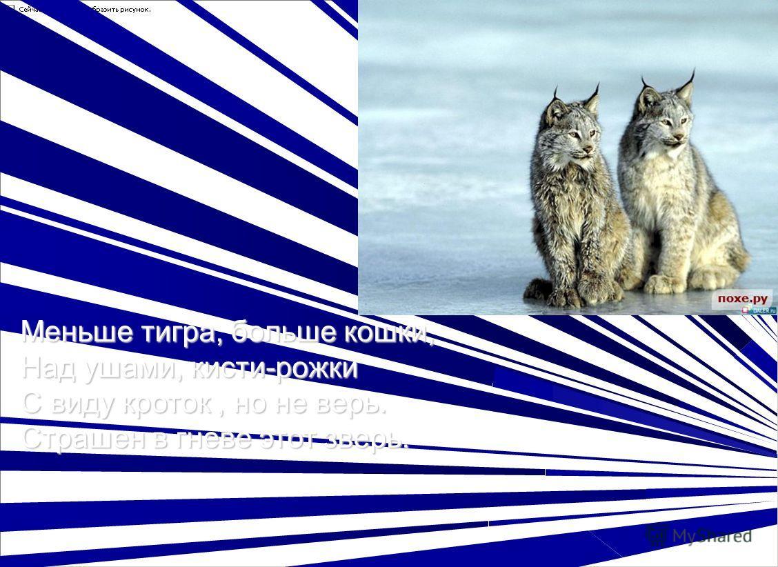 Меньше тигра, больше кошки, Над ушами, кисти-рожки С виду кроток, но не верь. Страшен в гневе этот зверь.