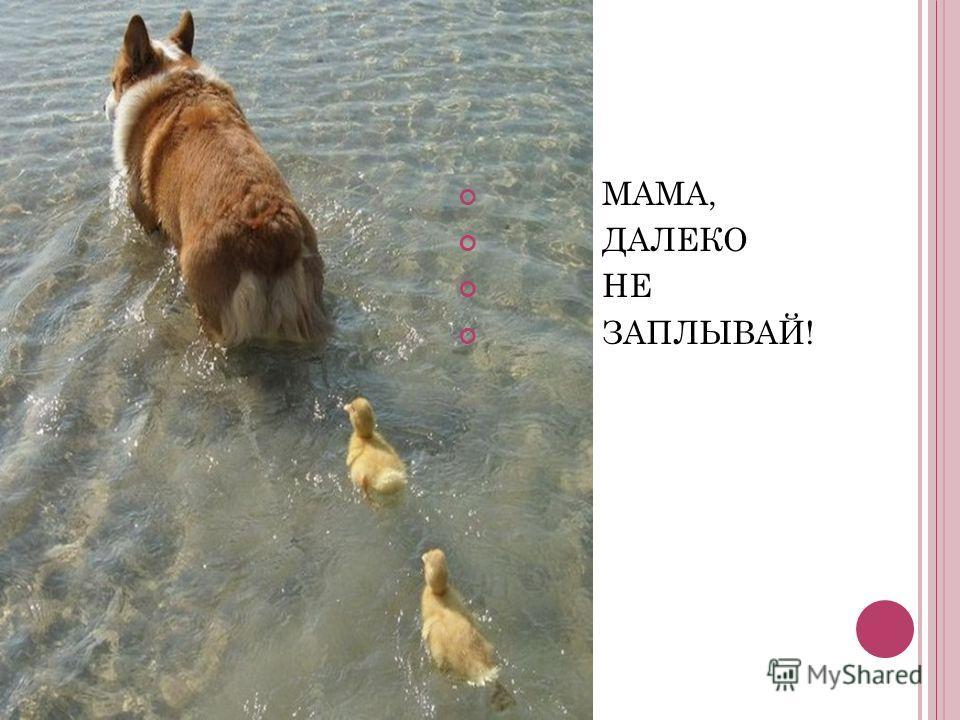 МАМА, ДАЛЕКО НЕ ЗАПЛЫВАЙ!