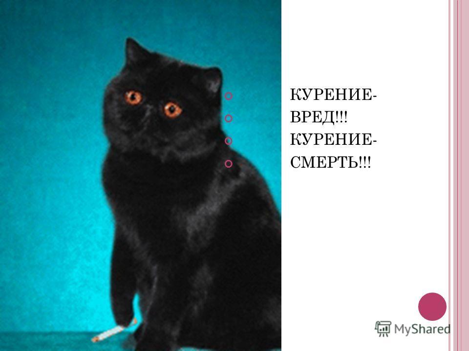 КУРЕНИЕ- ВРЕД!!! КУРЕНИЕ- СМЕРТЬ!!!
