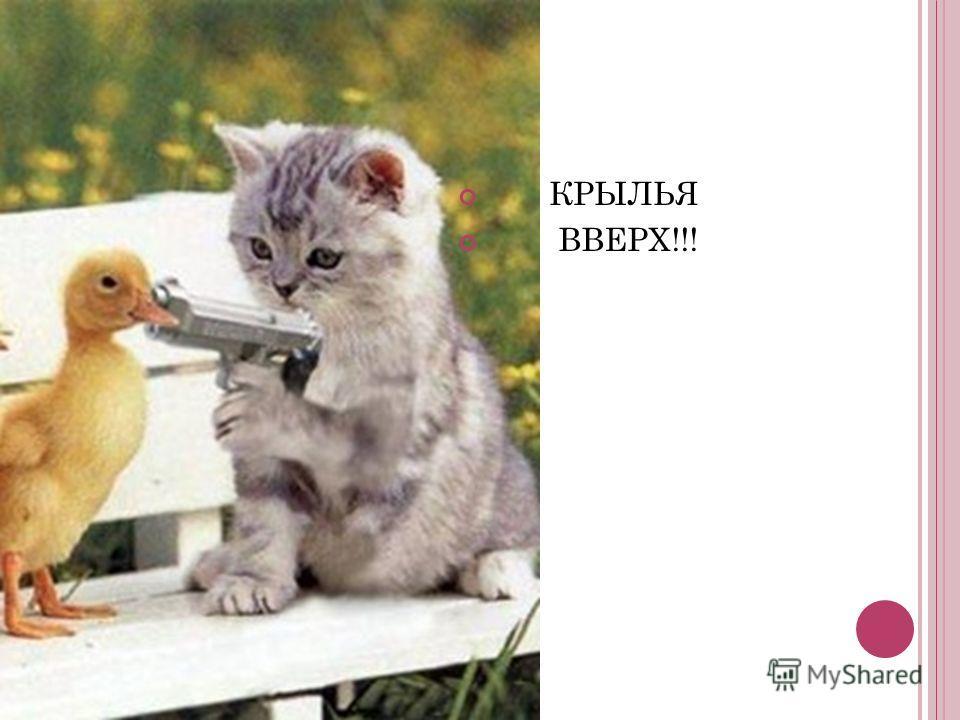 КРЫЛЬЯ ВВЕРХ!!!