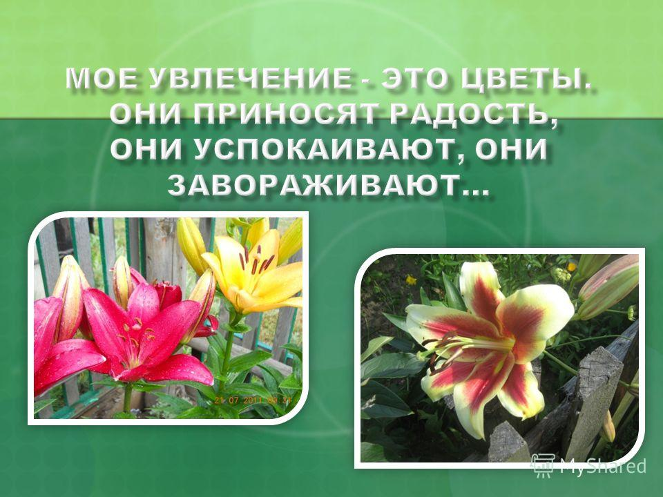 Раиса Яковлева Соколова Е- mail : jkovleva54@gmail.com Skype: jkovleva52