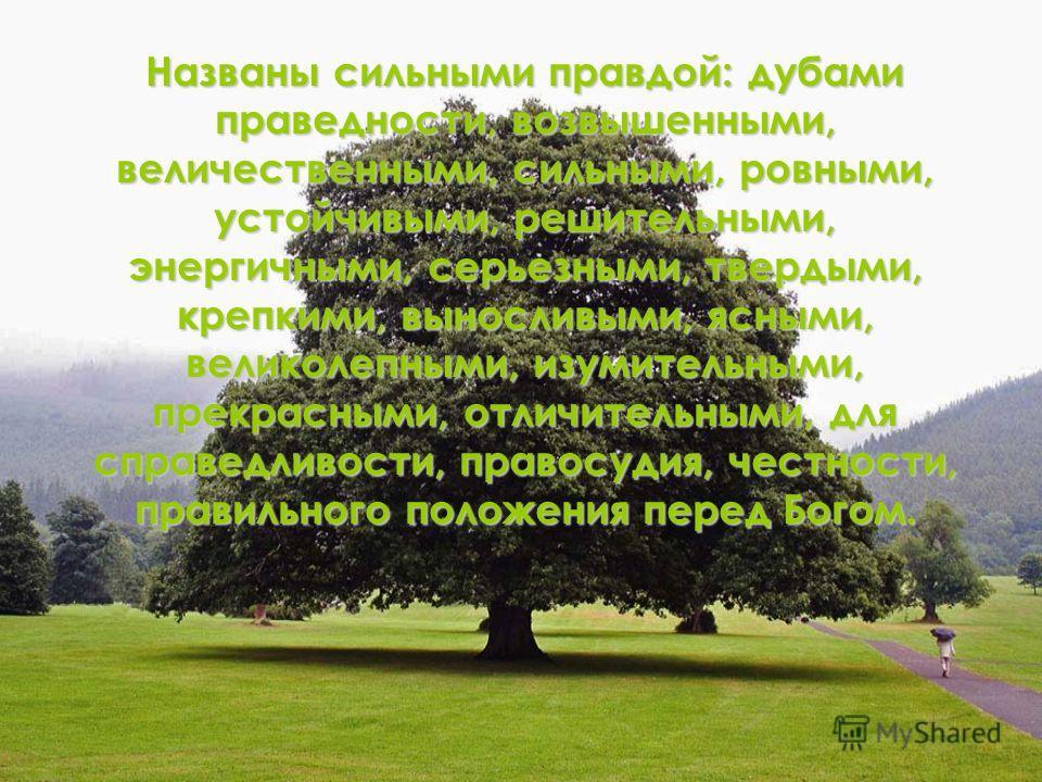 Названы сильными правдой: дубами праведности, возвышенными, величественными, сильными, ровными, устойчивыми, решительными, энергичными, серьезными, твердыми, крепкими, выносливыми, ясными, великолепными, изумительными, прекрасными, отличительными, дл