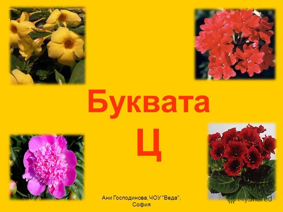 Ани Господинова, ЧОУ Веда, София Буквата Ц