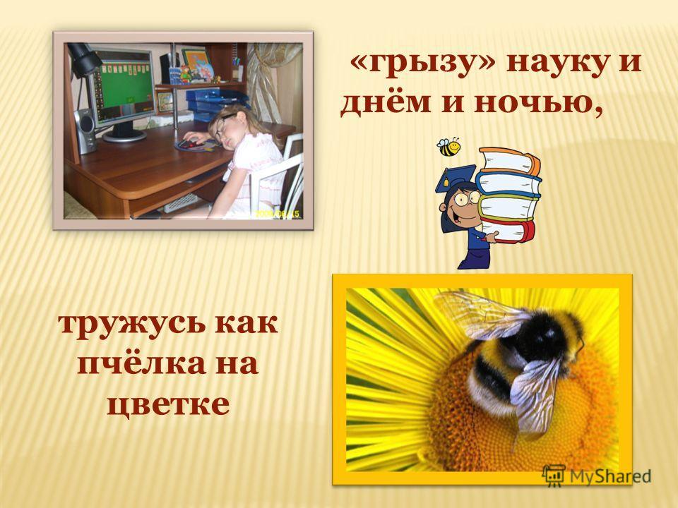 тружусь как пчёлка на цветке «грызу» науку и днём и ночью,