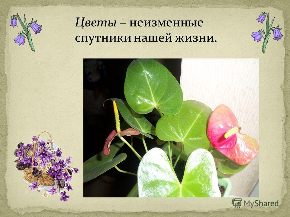 Цветы – неизменные спутники нашей жизни.