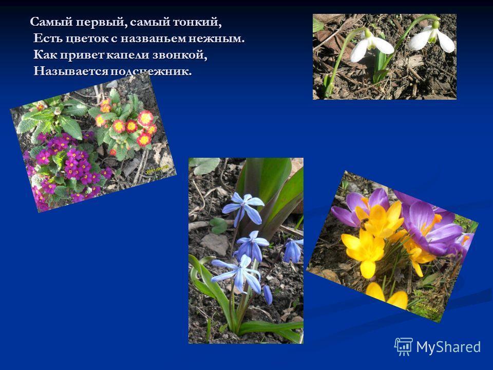 Самый первый, самый тонкий, Есть цветок с названьем нежным. Как привет капели звонкой, Называется подснежник.